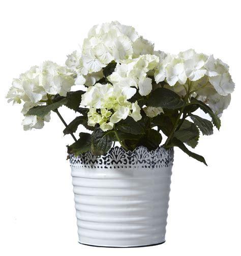 White Flower Pot Large White Flower Pot Tutti Decor Ltd