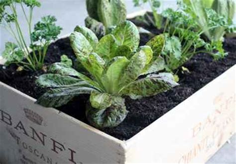 Wine Box Planter Diy by 18 Diy Elevated Planter Boxes For Easy Gardening
