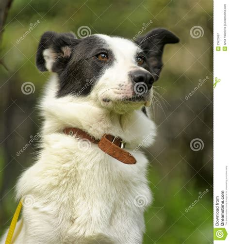 dogs with spots white with black spots royalty free stock photography image 33825697