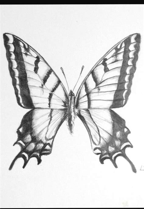 advanced butterfly coloring pages 407 best images about greyscale coloring pics on pinterest
