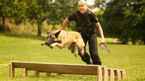 how are k9 dogs trained image gallery k9