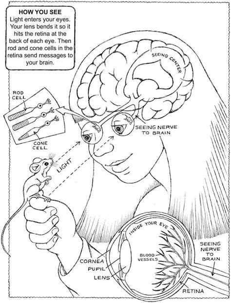 anatomy of the brain coloring book 9 best coloring pages lineart anatomy images on