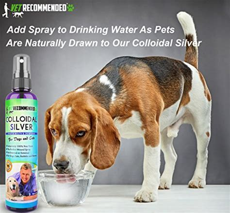 colloidal silver for dogs 39 vet recommended colloidal silver for dogs cats colloidal silver spray