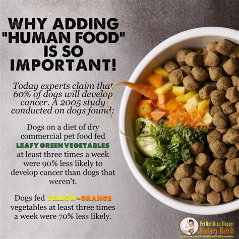 vegetables that are for dogs what green vegetables are for dogs carspart