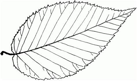 sycamore leaf coloring page leaf outline clipartion com