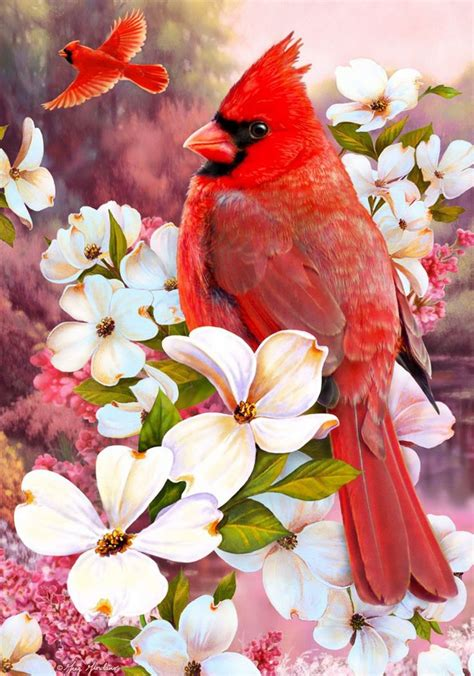 soaring on the cardinal house books 1050 best birds in west virginia images on