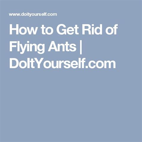 how to get rid of ants in my room 25 best ideas about flying ants on pest supplies what kills fruit flies