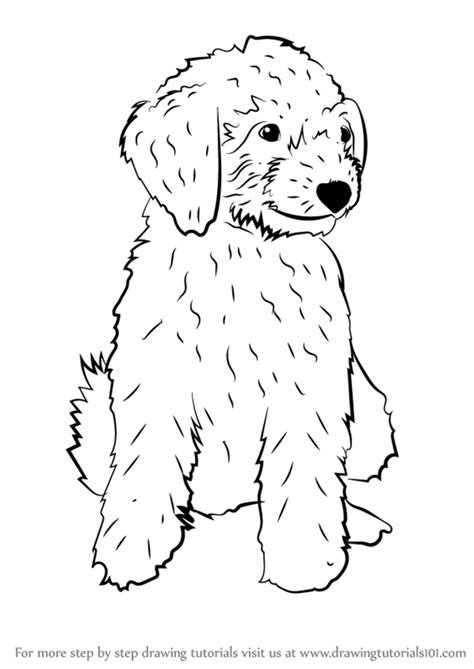 how to draw a doodle for learn how to draw a mini goldendoodle dogs step by step
