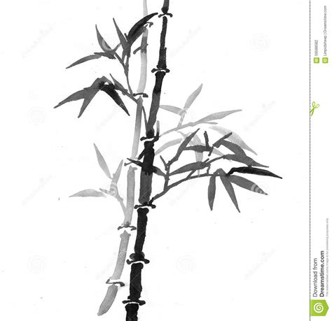 chinese bamboo art stock illustration illustration of