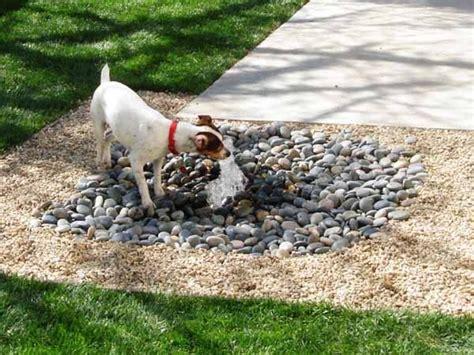 dog backyard 25 best ideas about dog friendly backyard on pinterest diy dog yard dog toilet and