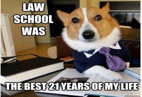 Corgi Lawyer Meme - image gallery lawyer dog