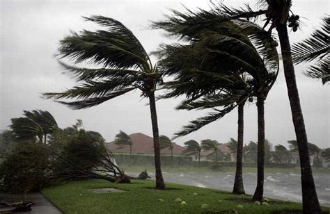 Backyard Wheat Environmental Consulting Palm Trees Lessons About Storm