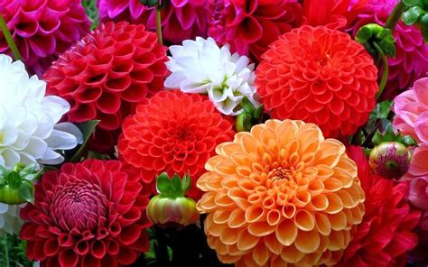 imagenes en ingles de flores 15 nombres de flores comunes vocabulario aprendamos
