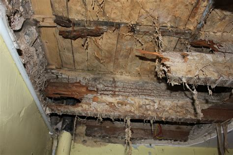 buying a house with dry rot dry and wet rot services j p lee co