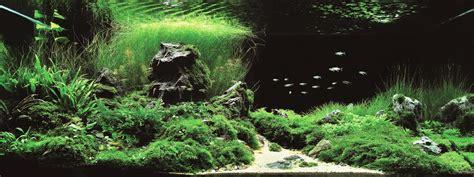 Layout Aquascape ジブリのような世界が広がる 世界水草レイアウトコンテスト受賞者の幻想的なアクアリウム 注文住宅 家づくりのこと