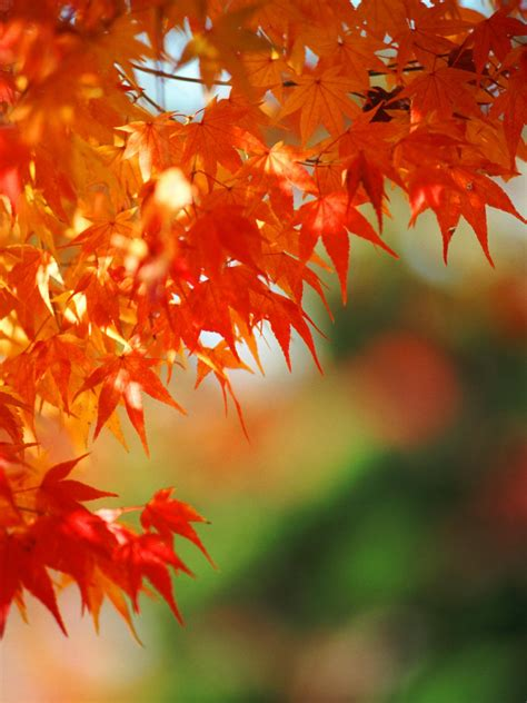 amazing color for the fall landscape landscaping ideas 6 colorful plants for fall hgtv