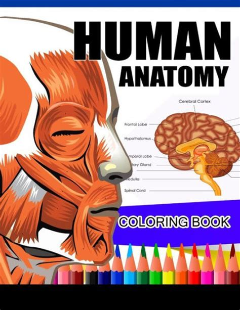 anatomy coloring book barnes and noble human anatomy coloring book anatomy physiology coloring