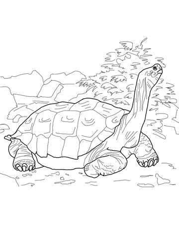 galapagos penguin coloring page how to draw galapagos penguin