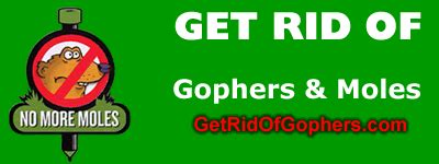 how to get rid of gophers in your backyard site map get rid of gophers com