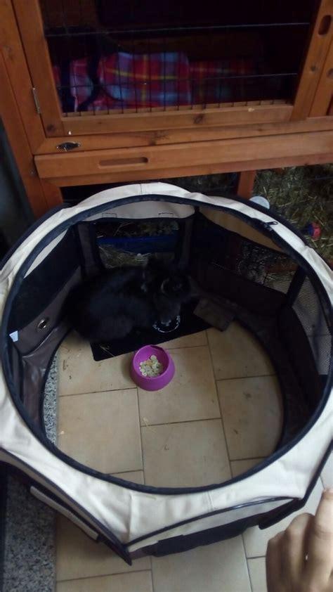 recinto per cuccioli da interno recinto per cuccioli tienilo al sicuro