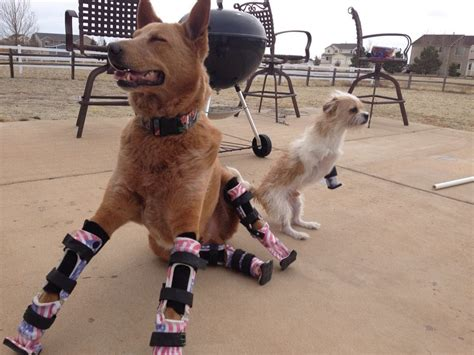 handicap dogs brave dogs with disabilities