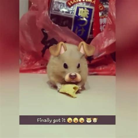 cute animal instagrams popsugar pets