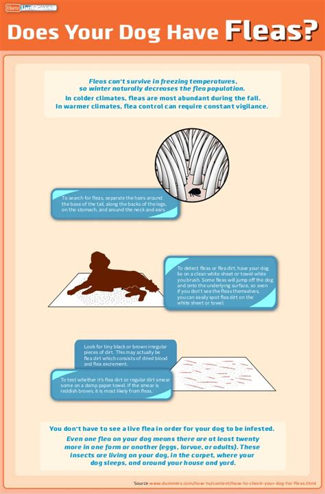 how to check for fleas hartz mountain infographic how to check your for fleas