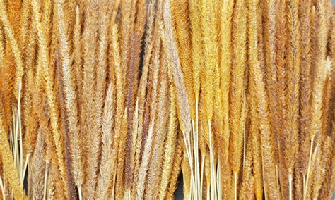dried grasses goedegebuure natural decorations