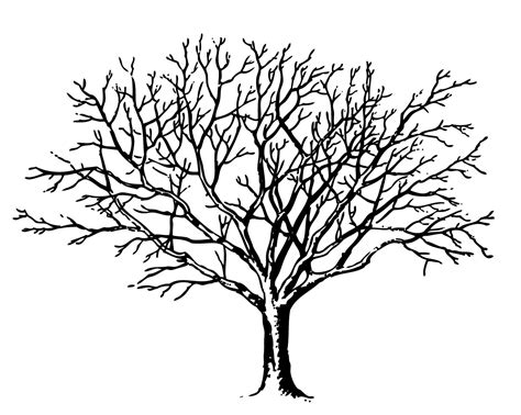 line drawings trees bare tree with branches clipart best
