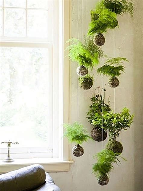 low light hanging plants indoors 25 best ideas about indoor plant decor on pinterest