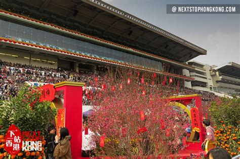 new year race day 2018 hong kong new year race day in shatin