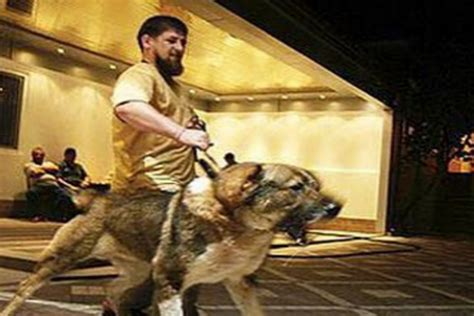attacks by breed 2016 does putin what his attack dogs are doing