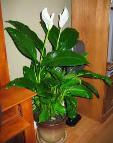 best inside plants best air purifying house plants
