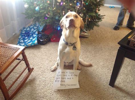 dog shaming christmas  pics