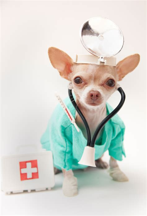 puppy doctor dogdoctor