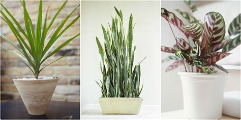 plants that thrive in artificial light low light houseplants plants that don t require much light