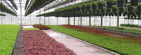 greenhouse benches commercial how to bench a commercial greenhouse commercial greenhouse structures systems