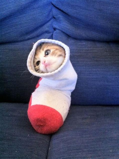 Kaos Kucing 1 apa hubungannya kucing dengan kaos kaki tidak ada