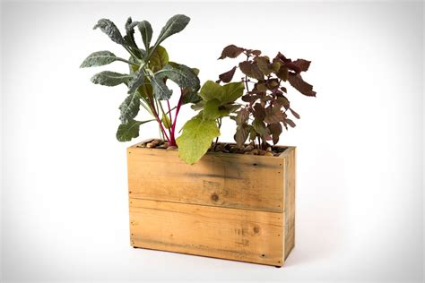 Modern Sprout Planter feedly modern sprout in planter your personal