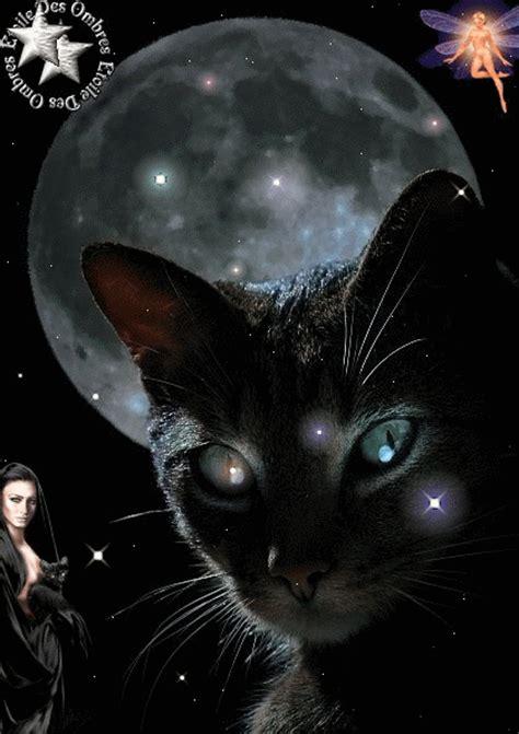 quanti credenti in questa sezione credono i gatti