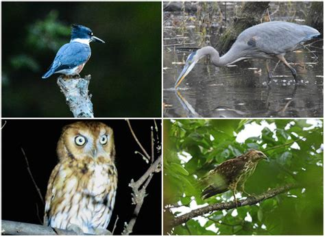chicago has scores of bird species here s your chance to
