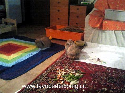 alimentazione forzata coniglio alimentazione forzata