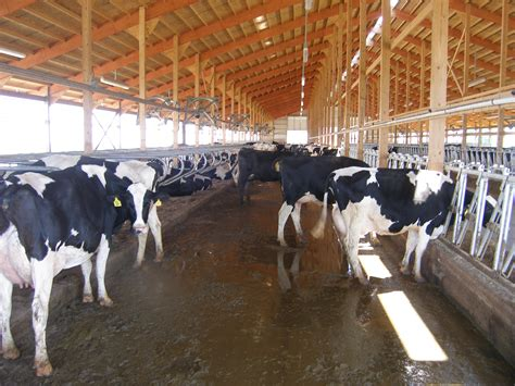 adult  barn   dairyland initiative