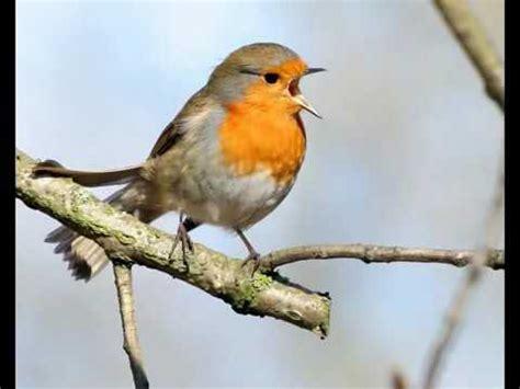 uccelli non volanti islamic songs gazal 2016 fuler gondhe mon vore