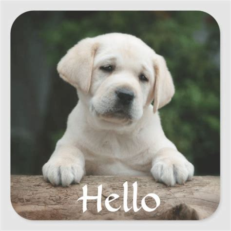 labrador retriever puppy dog stickers zazzlecom