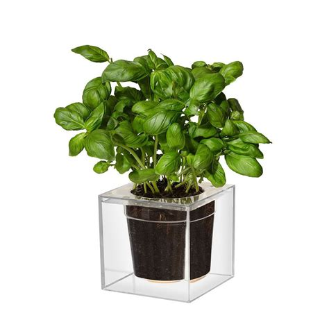 Self Water Planter by Boskke Clear Cube Self Watering Planter The Green