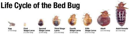 bed bug services inspection urban heat solutions