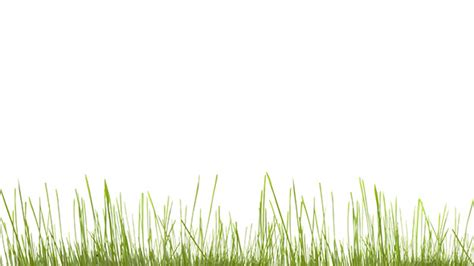 background powerpoint template green grass texture