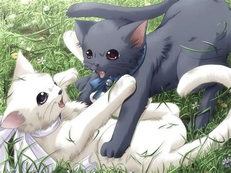 Anime Animals by Anime Animal Images Cats Hd Wallpaper And Background