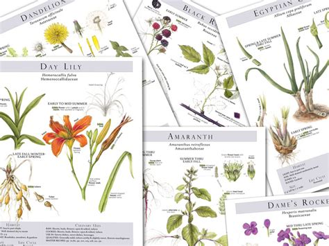 what a plant knows a field guide to the senses updated and expanded edition books foraging feasting a field guide and food cookbook